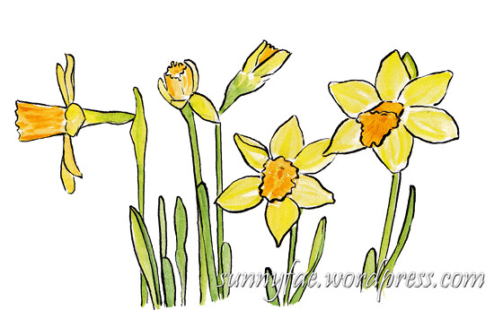 sketching group of daffodils
