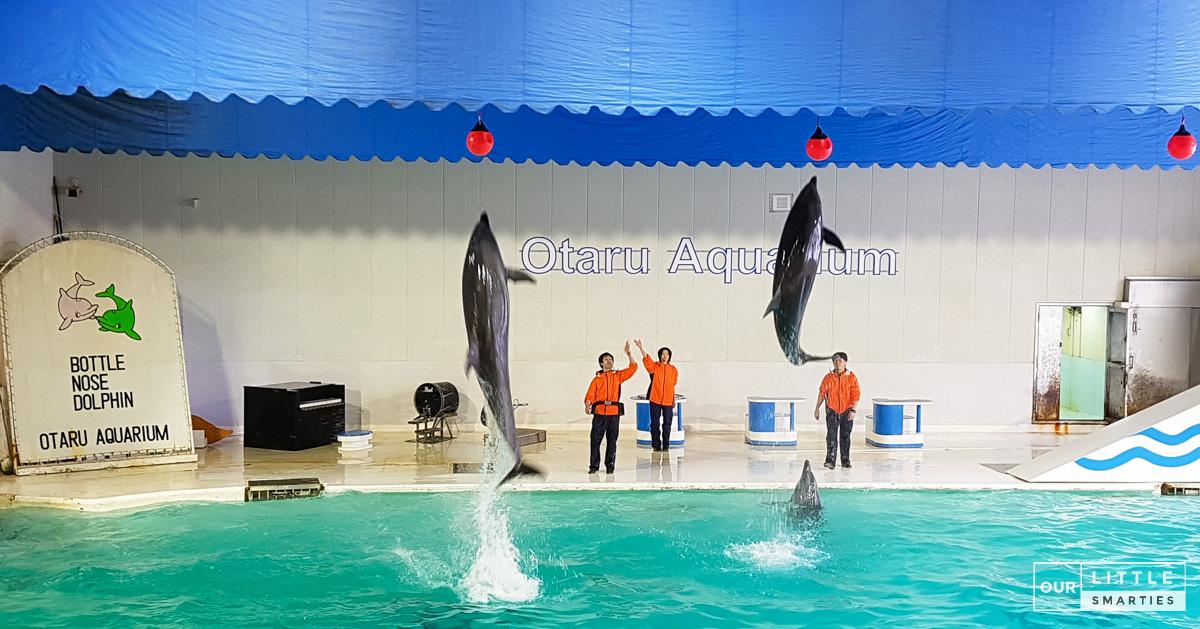 Dolphin Show at Otaru Aquarium