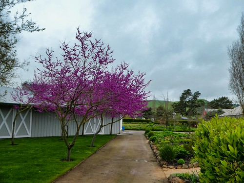 2019-04-06 - Outdoor Photography - Nature - Cornerstone Sonoma