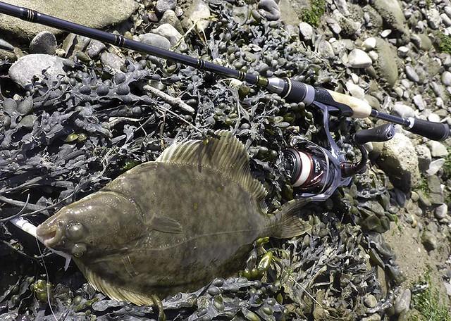 flounder 1, Panasonic DMC-FT5