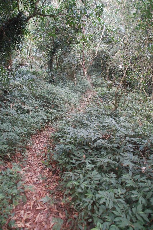 四社山登山小徑 2