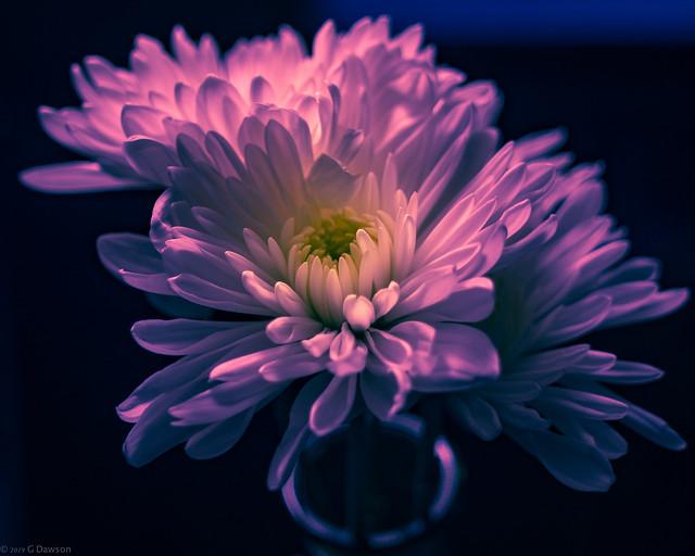 FLOWER, Nikon D7200, AF Nikkor 20mm f/2.8D