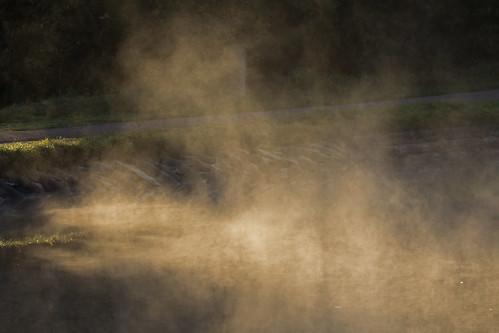mist and light - Riverside Valley Park, Exeter, Devon - Sept 2018