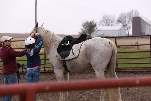 Horse Lessons (8)