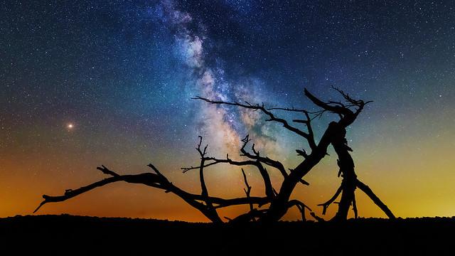 Piney under the Milky Way - Shenandoah National Park