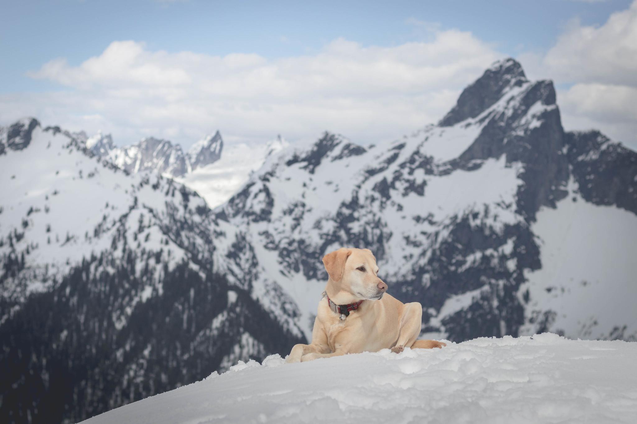 Summit dogs on Salvation Peak