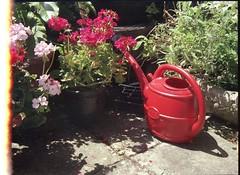 Kodak Retina IIS (Custom) - July 2017 - Red watering can in the sunshine
