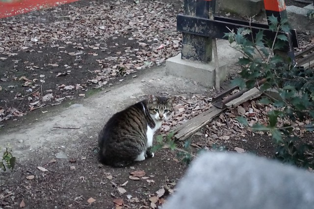 Today's Cat@2019-03-14