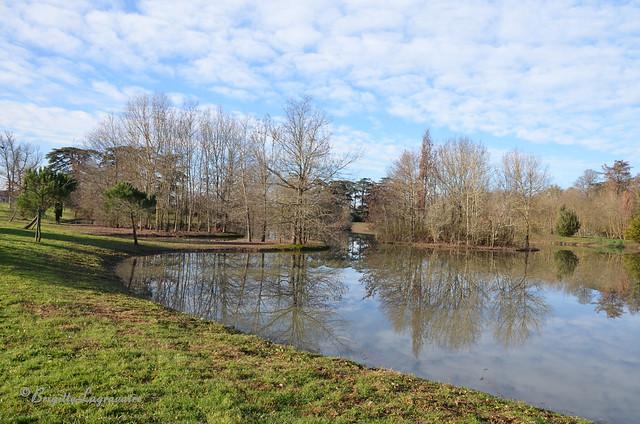 Lumière d'hiver sur les étangs
