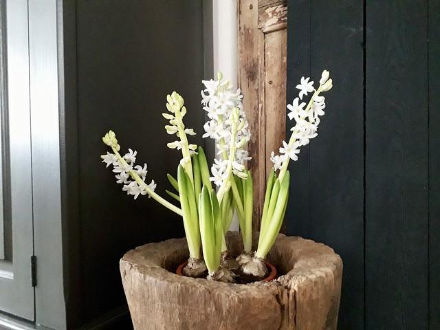 Vijzel met witte bloemen