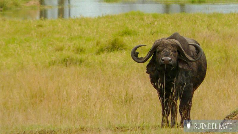 Animales hacer un safari P1130513