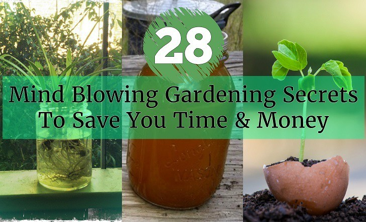 28 Mind Blowing Gardening Secrets To Save You Time and Money