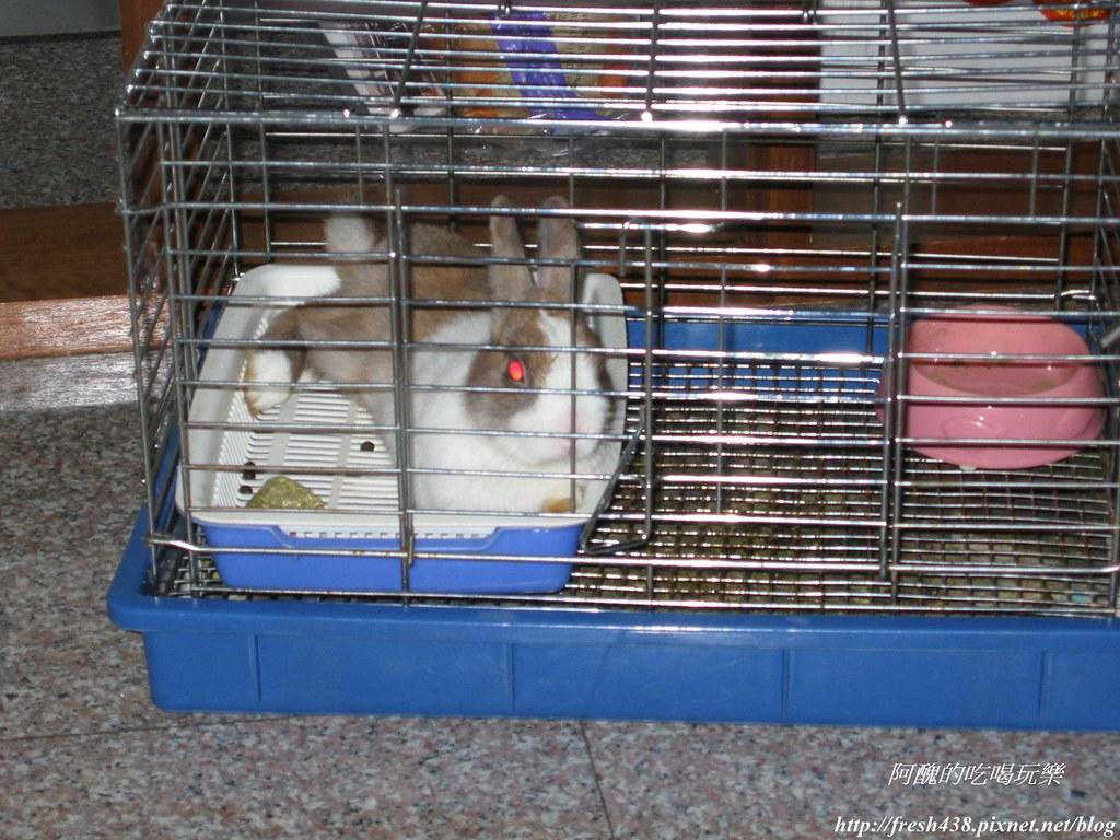 0083自從妹妹生產後,小可只好窩在舊籠子裡