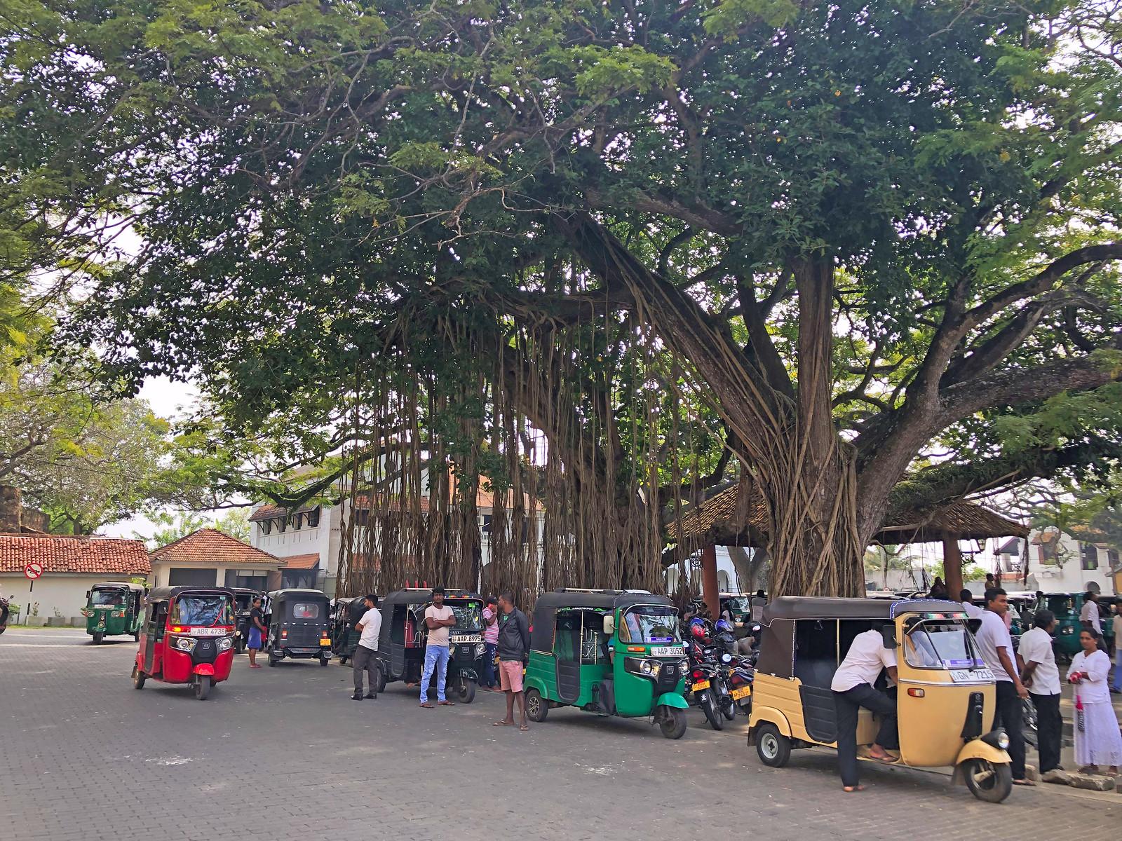 Visitar Galle en un día, Sri Lanka galle en un día - 47009236591 8ab274a253 h - Galle en un día, Sri Lanka