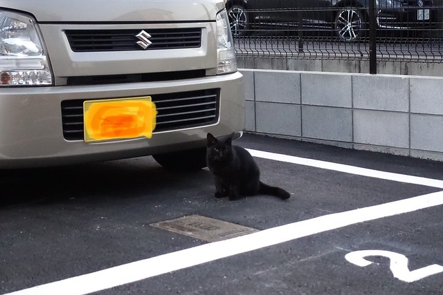 Today's Cat@2019-02-03