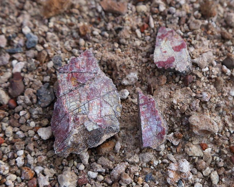 IMG_6232 Metoposaur Fossil