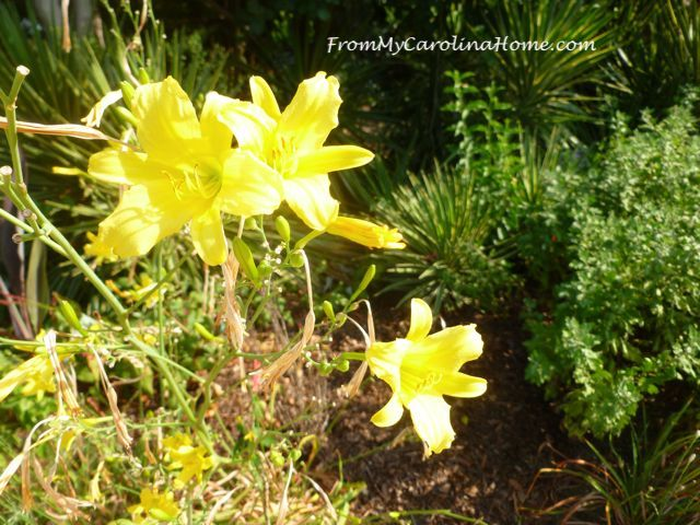 NC Raulston Arboretum at FromMyCarolinaHome.com