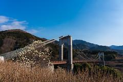 風の吊り橋@大倉