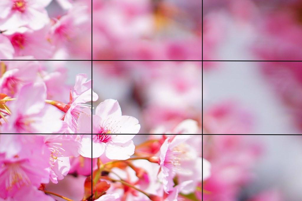 3分割単焦点桜 桜背景 3200
