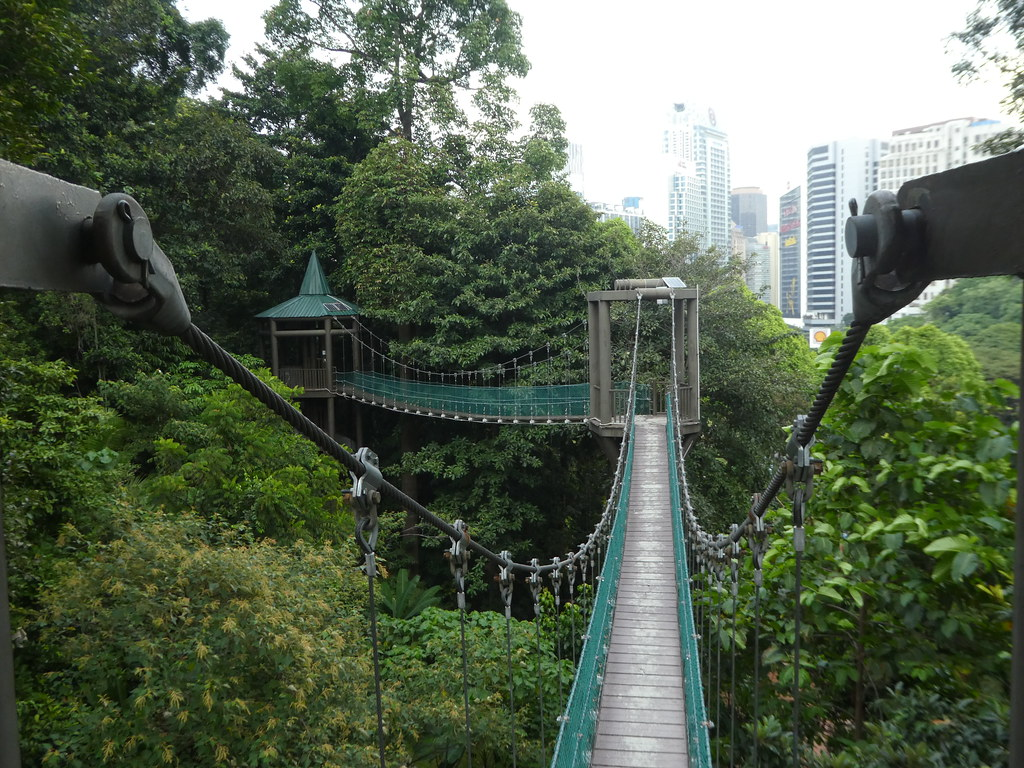 The raised tree top canopy walkways in the KL Eco Forest Park