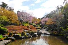 Taizo-in, Yoko-en (Garden) -6 (April 2019)