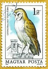 great stamp Hungary 1ft barn owl (Tyto alba, Schleiereule, сипуха,  Gyöngybagoly, kerkuil, Barbagianni, Pegasta sova, 仓鸮, lechuza, ambar sova, slørugle,  ladugårdowl, coruja, chouette effraie, dame blanch, tornipöllöstä, Effraie des clochers, Kukuvija