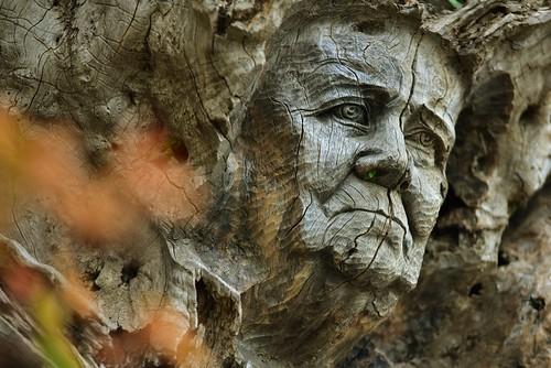 Raíces. Escultura en madera, en el propio árbol, de Ricardo Dávila para homenajear a las gentes del pueblo.