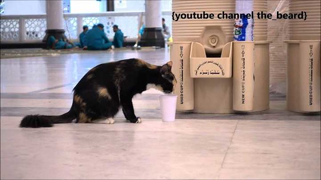 4959 What are the Islamic teachings related to Cats 02