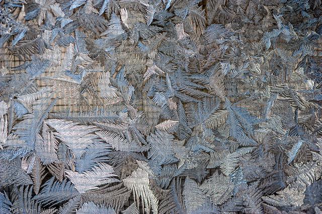 Fern frost 10