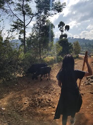 Meron_goats