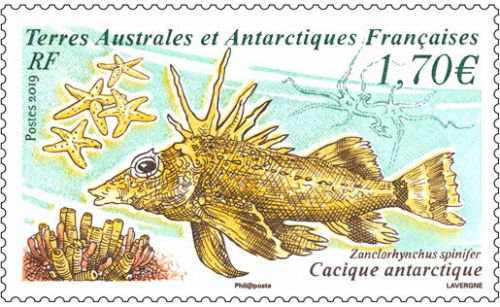 French Southern and Antarctic Lands - Antarctic Horsefish (January 2, 2019)