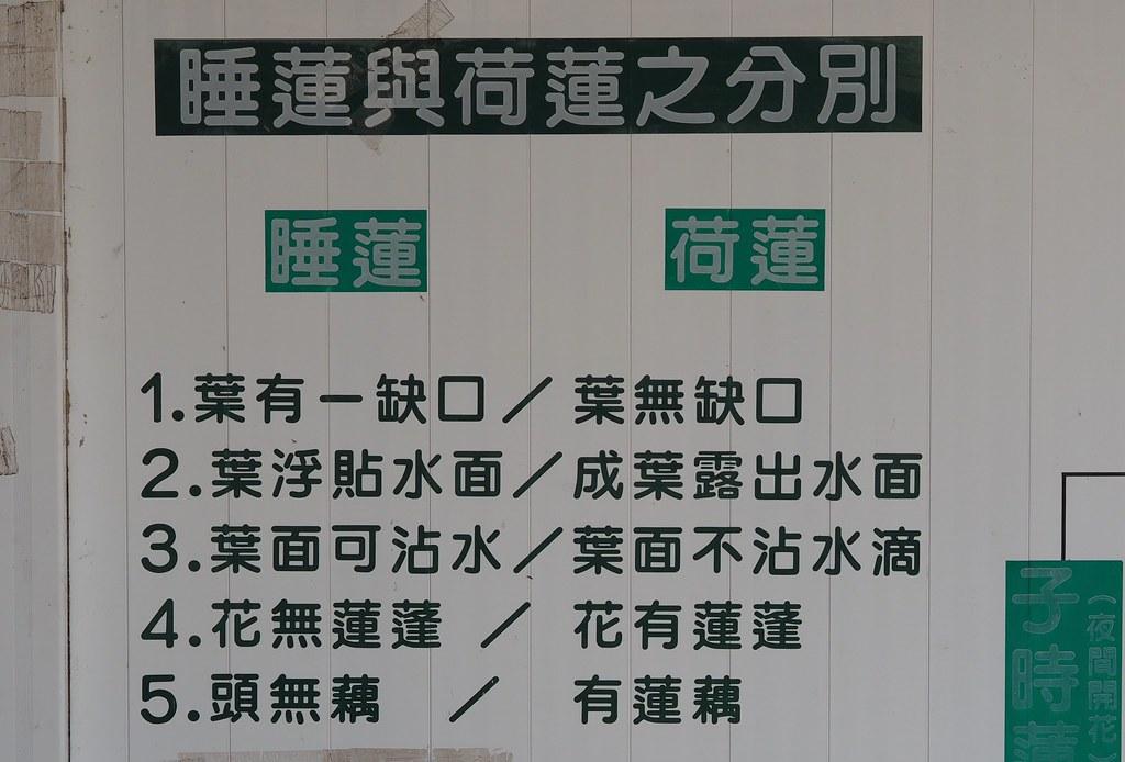 白河木棉花季 (15)
