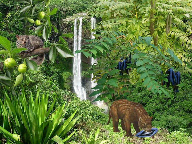 Дегенея у водопада