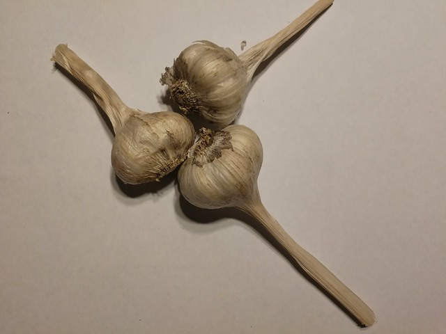 heirloom softneck garlic