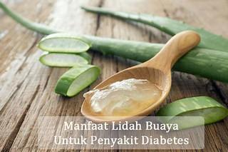 Manfaat Lidah Buaya Untuk Penderita Diabetes