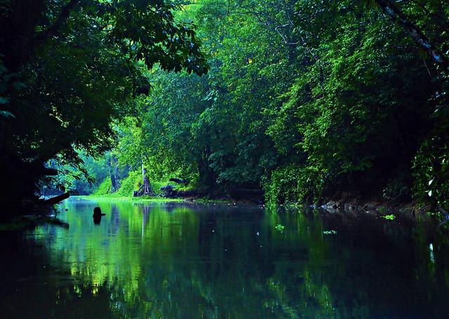 Quando se trata da Amazônia, é um olho no gato e o outro na cumbuca