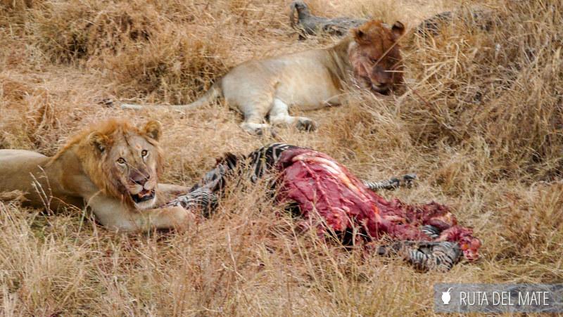 Animales hacer un safari P1140713