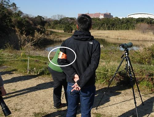 東京港野鳥公園のスタッフさん