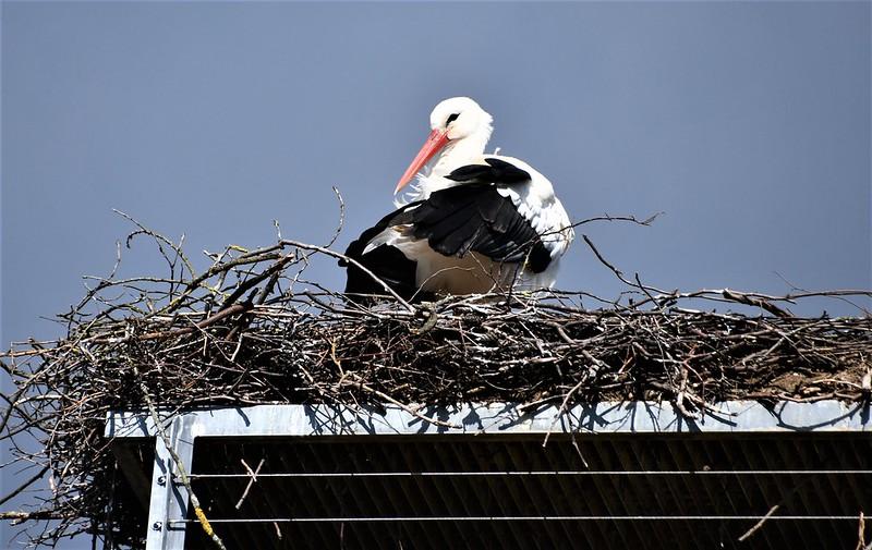 Stork 19.03 (11)