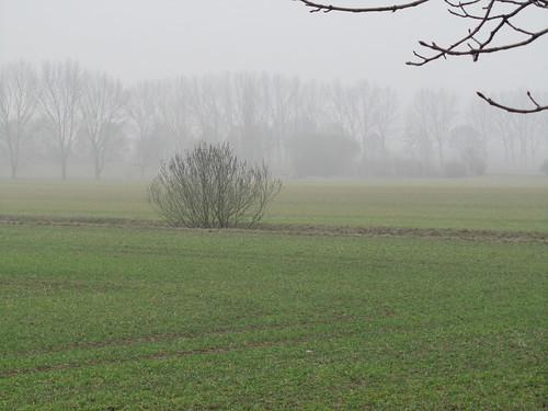 20110316 0203 195 Jakobus Feld Nebel Bäume