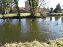 Herlies étang de la ferme de Valmonchy