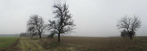 20110315 0202 065 Jakobus Feld Bäume Nebel_P01