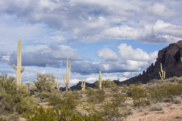 Arizona Dessert east of Apache Junction_BQR3537