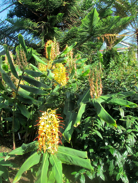 Dundee Botanics, greenhouse
