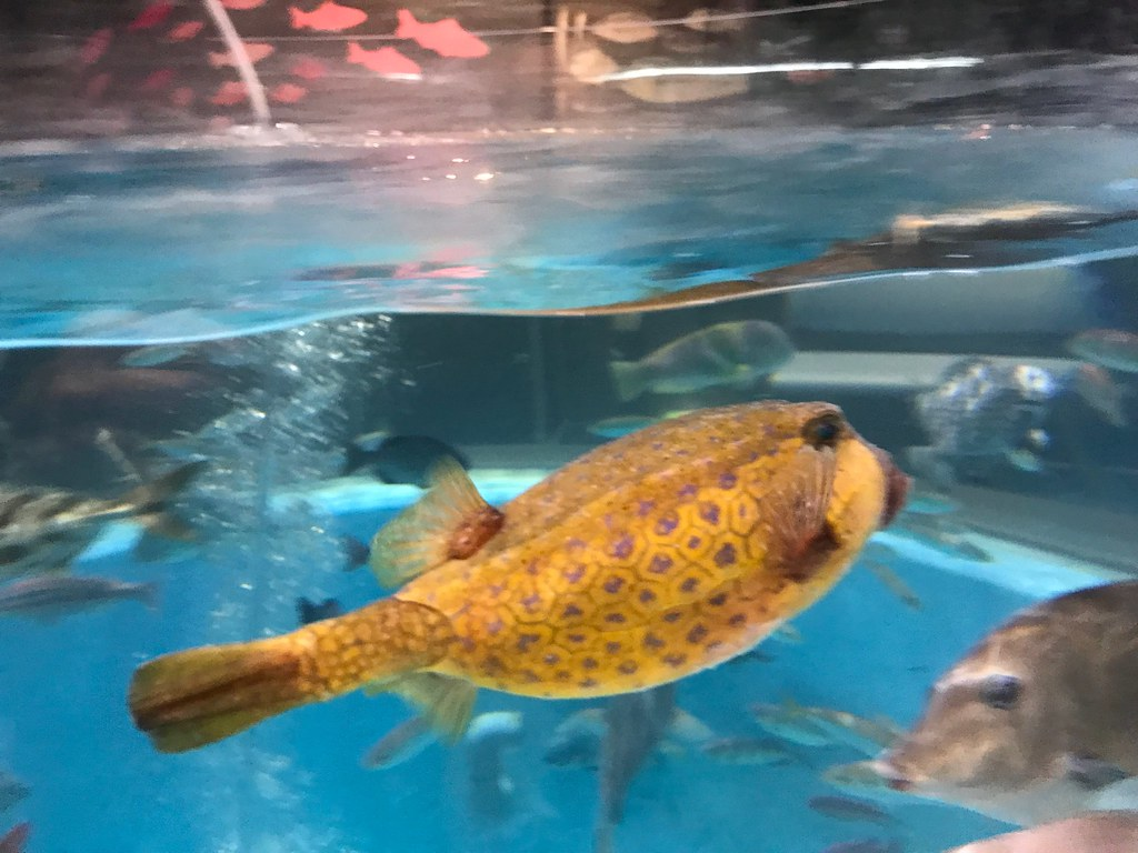 Murotohaiko Aquarium