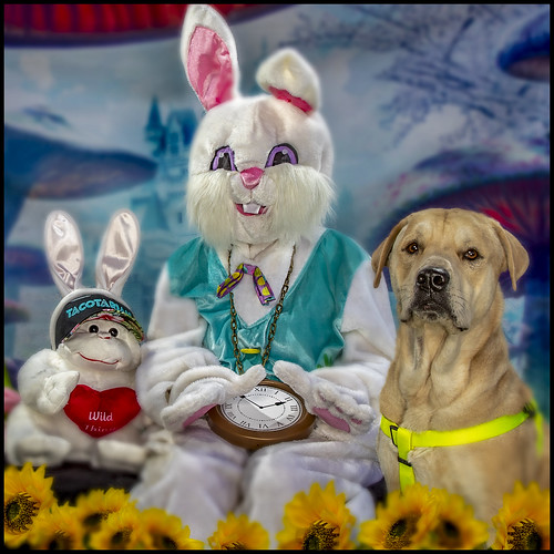 The Bunny, Happy & the Tacotarian Easter Monkey