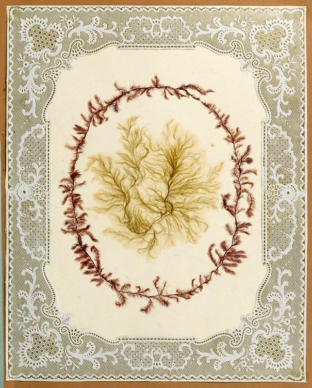 006-Album de algas marinas-1848- Brooklyn Museum Library