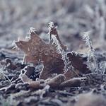 Winter Frost Bokeh - 21. Januar 2019 - Schleswig-Holstein - Deutschland
