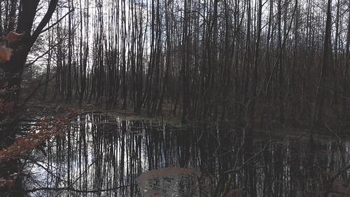 Door de bomen het bos niet zien, Ketliker Skar