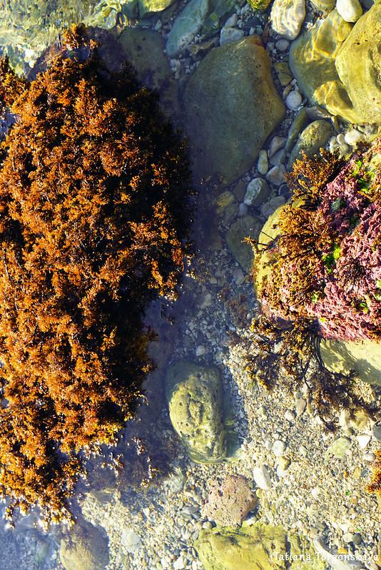 Камни с водорослями в морской воде